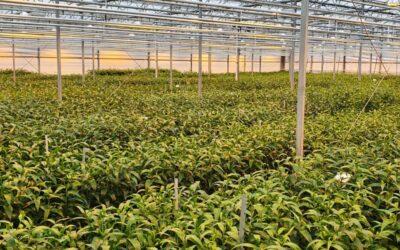 Zuidelijk halfrond proeven oogst 2020 voltooid