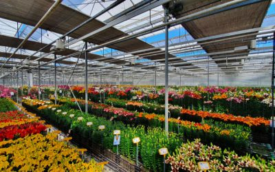 Test results lily trials 2021 online