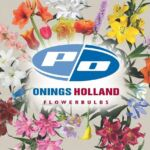 Onings Holland Flowerbulbs